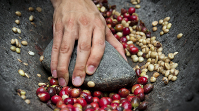 coffee-process-origin