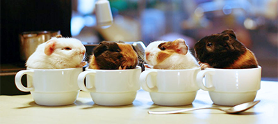 cute-coffee
