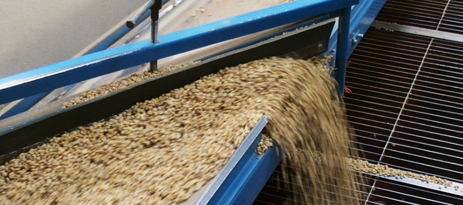 bean processing