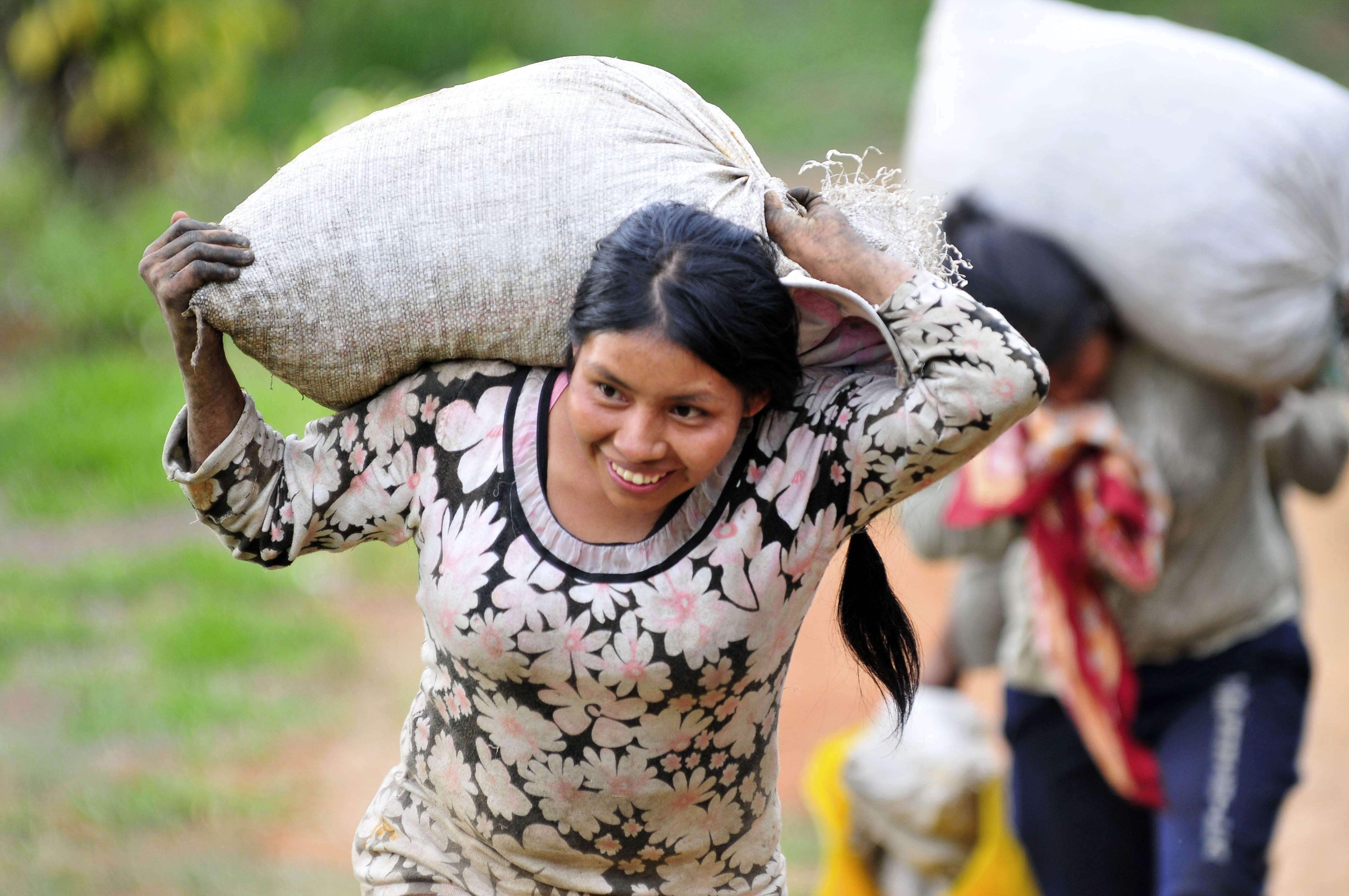 Farm workers carry sacks of coffee beans in Colombia's southwestern Cauca department