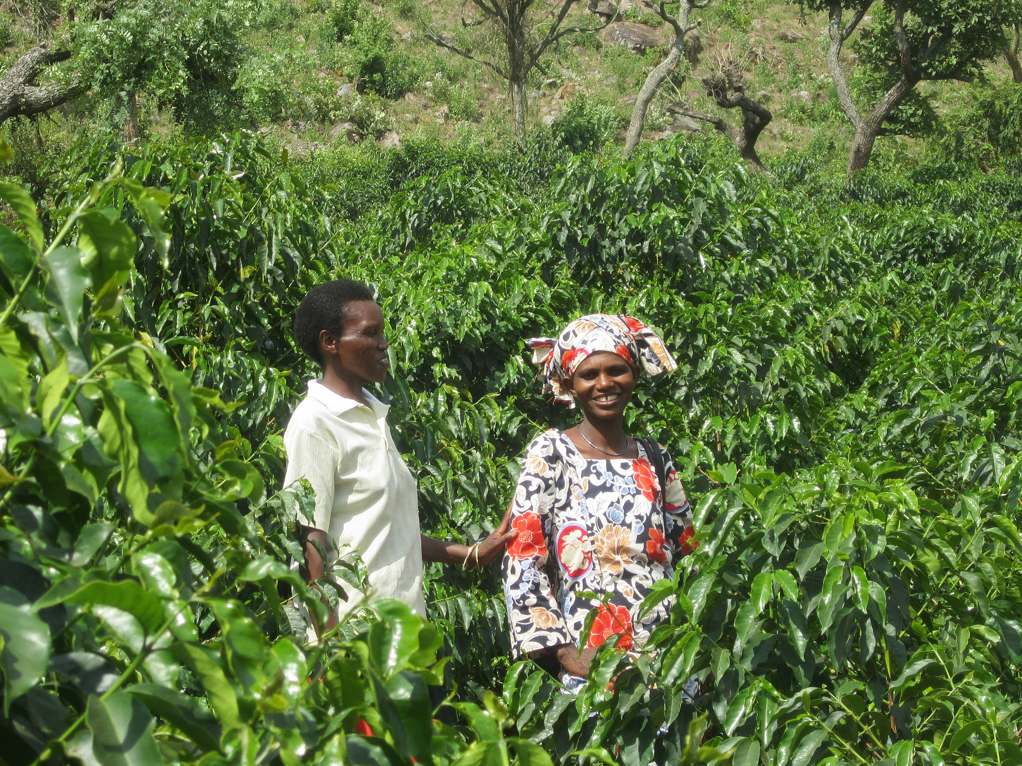 Women farmers of the Cocamu Coffee Cooperative in Rwanda with their coffee trees